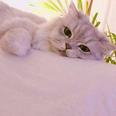 卖萌搞笑的小猫咪动物头像超可爱 不要纠缠不