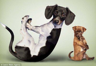 趣图:搞笑的动物瑜伽 (3)