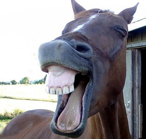 搞笑的动物表情图片大全