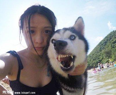 搞笑动物表情图片