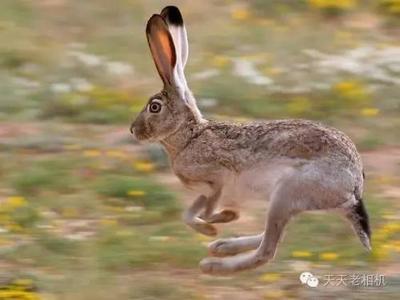 【两个动物跑的图片大全2015】两个动物跑的