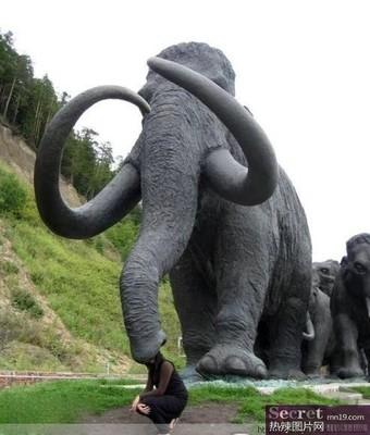 组图:搞笑动物照大全 大象最疯狂令人匪夷所思