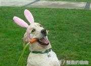 搞笑图片:动物集体开会,贼好笑 - 今日头条(www