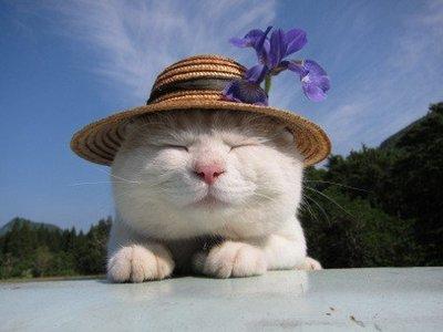 可爱搞笑动物图片大全